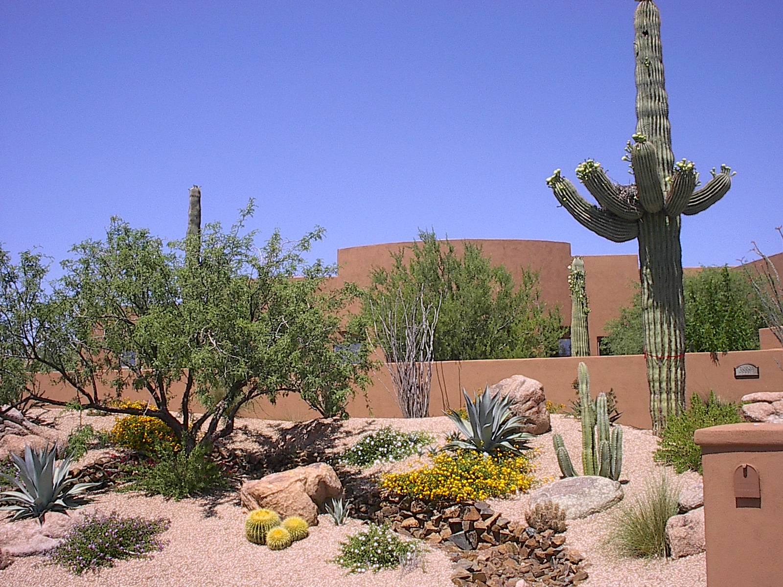 landscaper designs Drought Resistant Landscapes