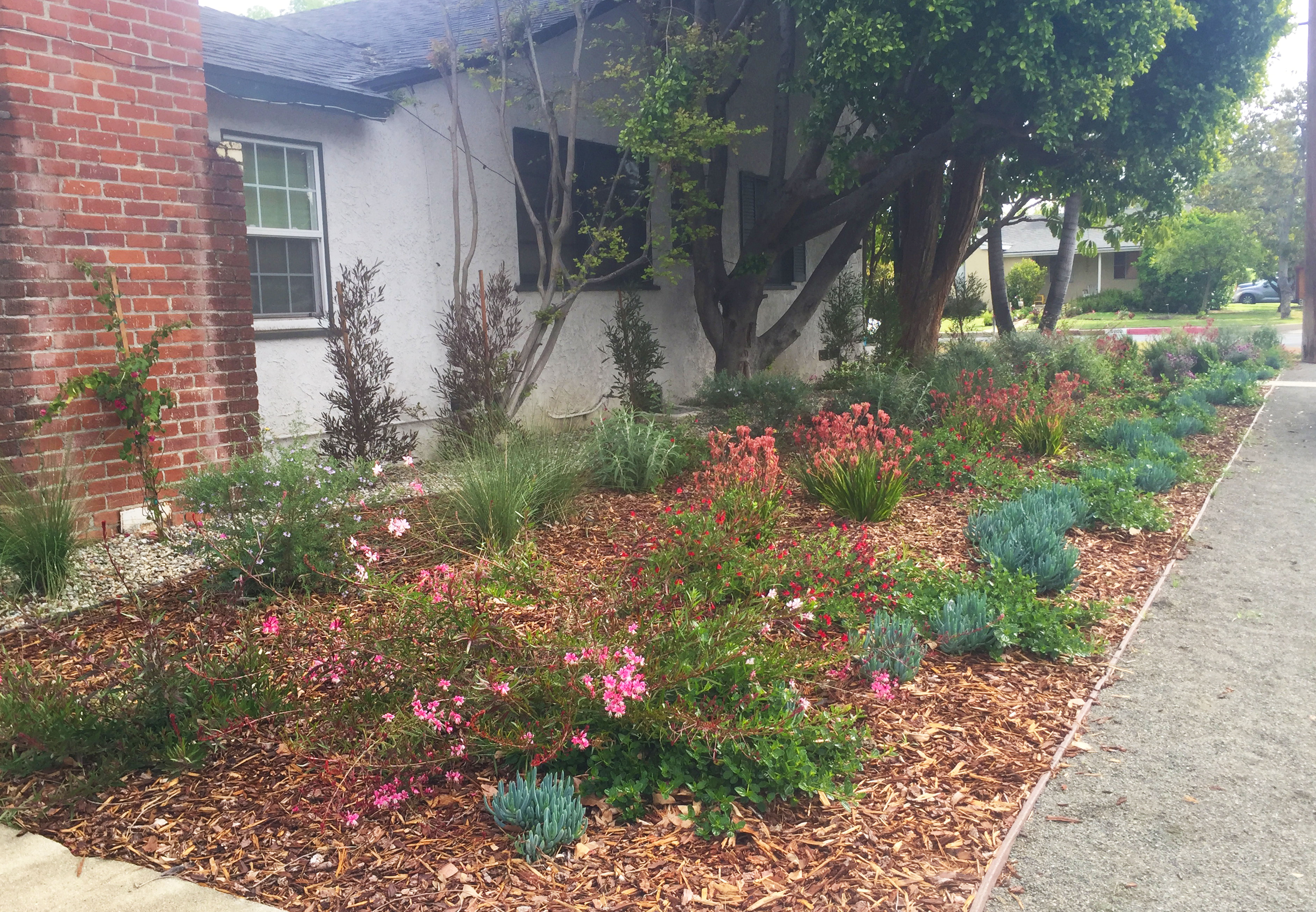 Landscaping Contractor in los angeles